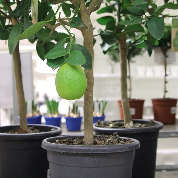 Växtlighet i varuhuset